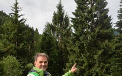 La Valsugana e la Val Campelle donano l'albero di Natale di Piazza San Pietro   a Papa Francesco